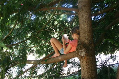 Kid Reading in a Tree
